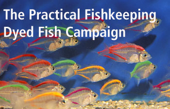 The Practical Fishkeeping Dyed Fish Campaign