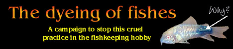 The Dyeing of Fishes, a Campaign to Stop This Cruel Practice in the Fishkeeping Hobby